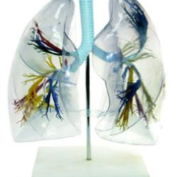 Plaušu modelis XC-330