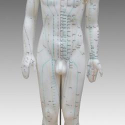 Akupunktūras cilvēka makets 60cm XC-518