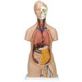 Anatomiskie cilvēka maketi